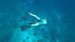 Vred fisk angriber dykkere