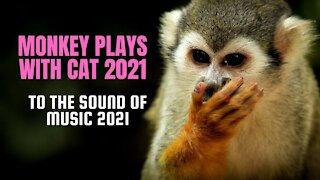 MONKEY PLAYS WITH CAT 2021 MUSIC 2021