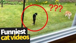 Hilarious Cat Viral Videos | Ultimate Cat Compilation #Viral