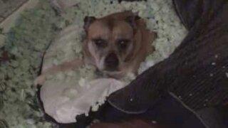 Dog turns bed into sleeping bag