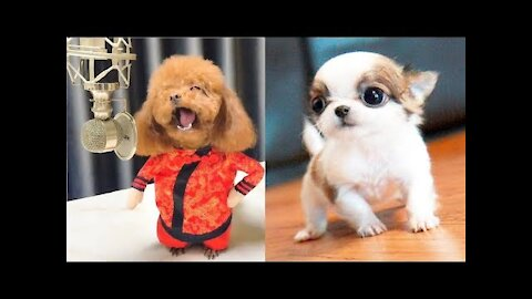 You will laugh a lot at all the dogs 🐶😂Videos funny cute dogs 🐶😂😂