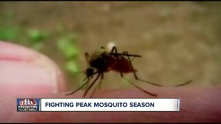 How to protect yourself from mosquitoes this summer