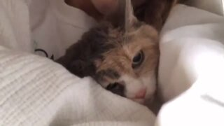 Cat makes it crystal clear he's not ready to get out of bed