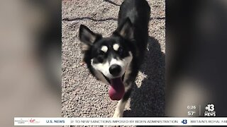Pet of the week: young Husky mix ready for forever home
