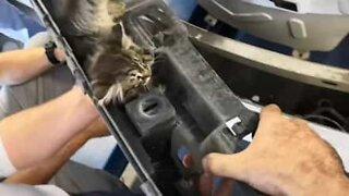 Kitten found stuck in car parts