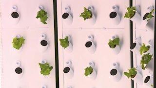ATW introduces hydroponic farming system