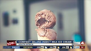 """Company selling """"insect milk"""" ice cream"""