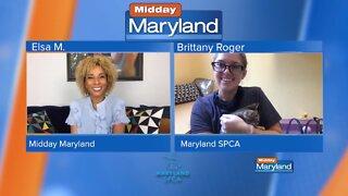 Maryland SPCA - Stray Cats