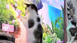 Kittens go crazy to get at birds & butterflies on TV