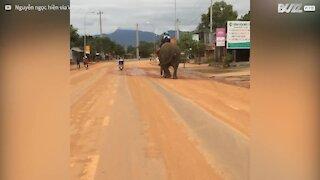 In Vietnam si va a scuola a dorso di un elefante