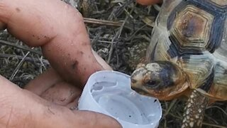 Firefighters give turtle drink of water during Cape Town fire