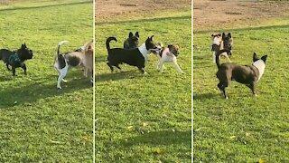 Socially awkward pup adorably makes friends at the dog park