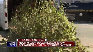 Massive illegal marijuana grow operation busted on Detroit's east side, thousands of plants seized