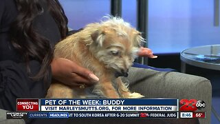 Pet of the Week: Jack Russell Terrier mix Buddy