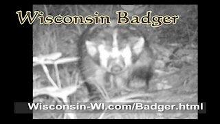 Badger Trail Camera June VIDEO - Landman Realty LLC