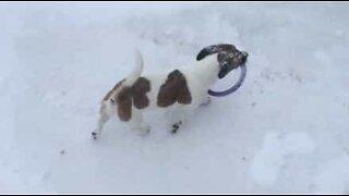Hund begravet i snø er fast bestemt på å komme seg til leketøyet sitt
