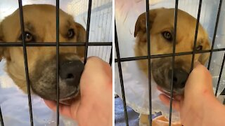 Rescue dog just wants cuddles after his leg is amputated