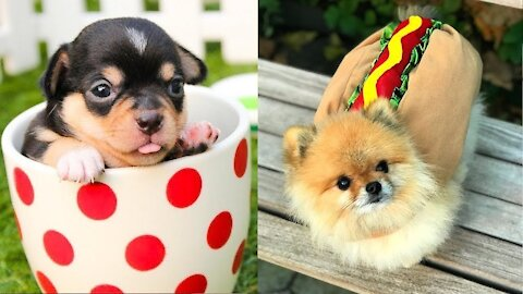 The funniest dogs 🐶 the internet, try not to laugh now 2021