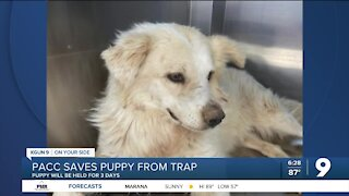 PACC helps dog recover after found caught in trap