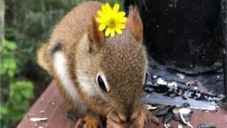 Squirrel gets a flower from his human friend