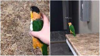 Conheça o pássaro que parece um canguru!