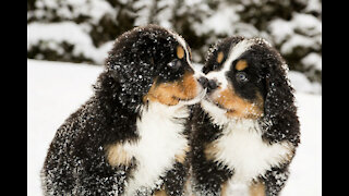 CUTE PUPPIES, ADORABLE PUPPIES