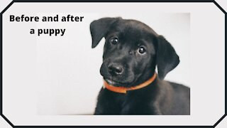Before and after a puppy