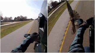 Falk kolliderer nesten med motorsyklist!