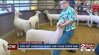 Kids get livestock ready for Tulsa State Fair