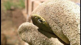 Catching a Garter Snake