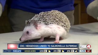 Hedgehogs linked to Salmonella outbreak
