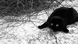 Ce chat est terrifié par la neige!