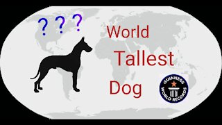 World tallest dog according to Guinness World records