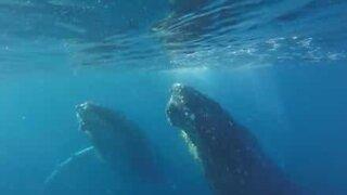 Synkroniserte hvaler i undervannsballett