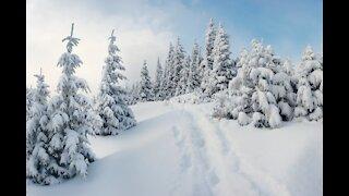 Beautiful winter frames