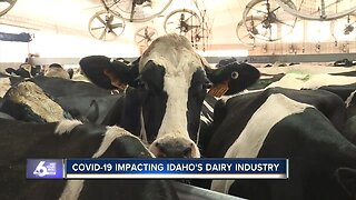 COVID-19 is having a significant impact on Idaho's dairy industry