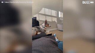 Cadela detesta que espirrem perto dela