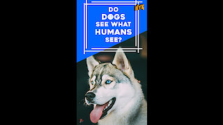 Do dogs see what humans see? *