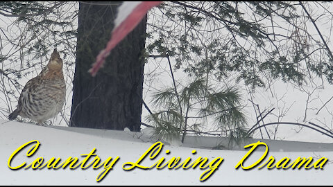 Country Living Drama ~ When Nature Strikes ~ Our Morning Emergency