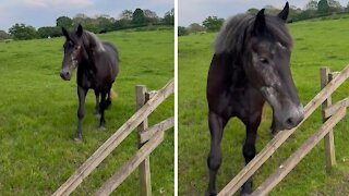 For this horse, the grass is always greener on the other side
