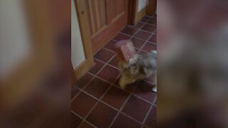 Dog Sticks her Nose in the Wrong Place!