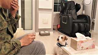 Jack Russell fetches tissue when owner sneezes