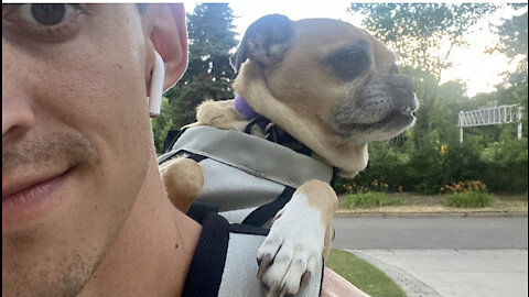 Cute Puppy Rides In Her Backpack