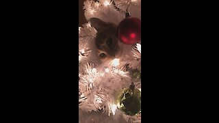 Cat chills out in middle of Christmas tree