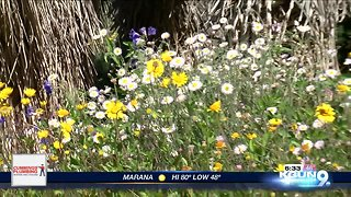 Seasonal Allergies are here, but why and how?