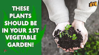 Top 4 Plants For Your 1st Vegetable Garden