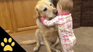 Funny Baby Playing With Dog.