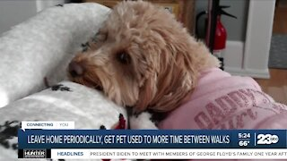 Helping your pets with separation anxiety