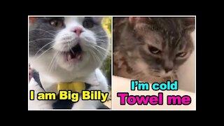 CATS got TALENT better than HOOMANS