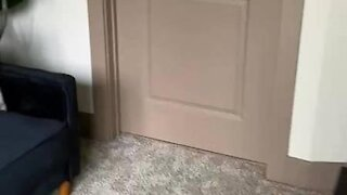 Dog opens door to beg for food